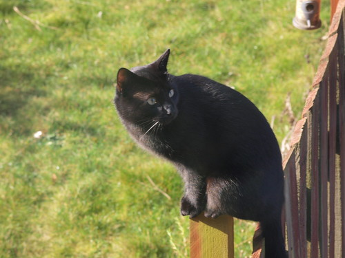 Black Cat on a Post | by Andy Vickers