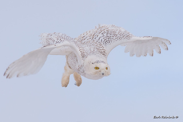 Unique flight position