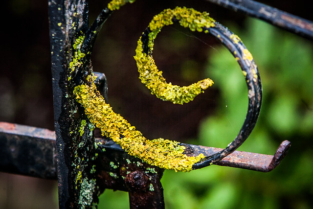 weathered gate (1 of 1)
