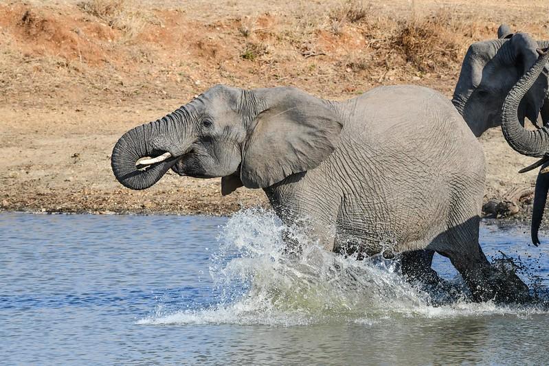 2294 Elephant