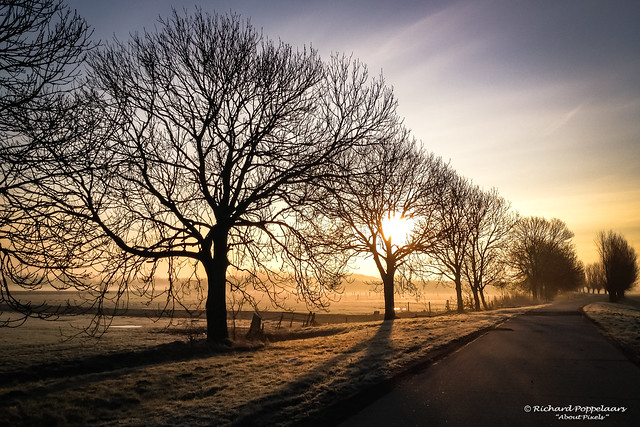 Golden light of the early sunrise (Zwartewaal/NL)