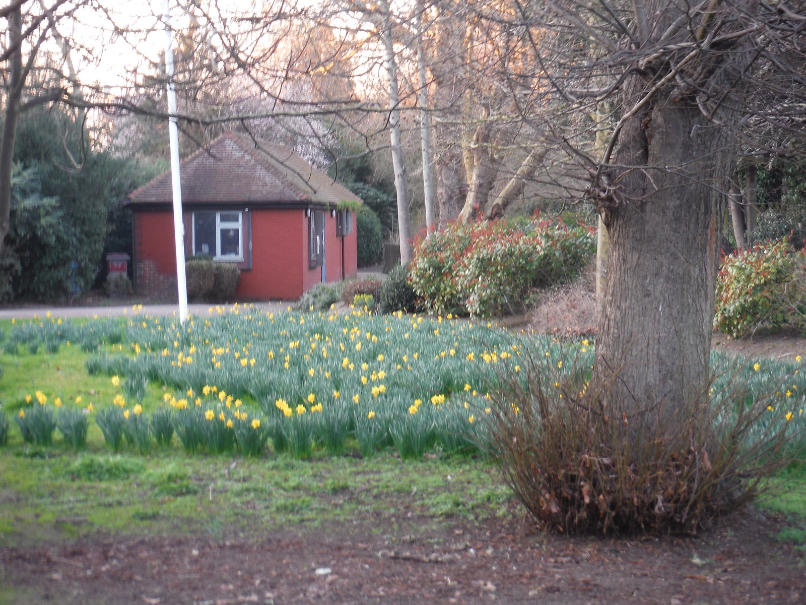 Daffs and Park Lodge, Brookmill Park SWC Short Walk 36 - Waterlink Way (Lower Sydenham to Greenwich)