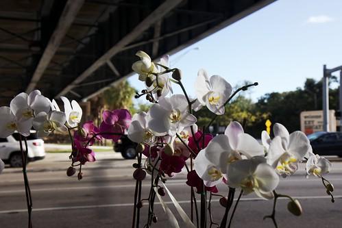 Tienda de Flores | by reillyandrew