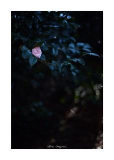 2019/2/3 - 1/9 photo by shin ikegami. - SONY ILCE‑7M2 / Carl Zeiss C Sonnar T* 1.5/50 ZM