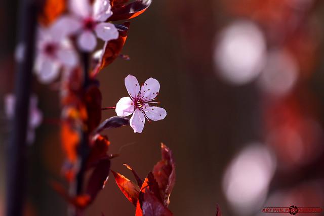 Fleurs Pétales de Couleurs et Prinptems