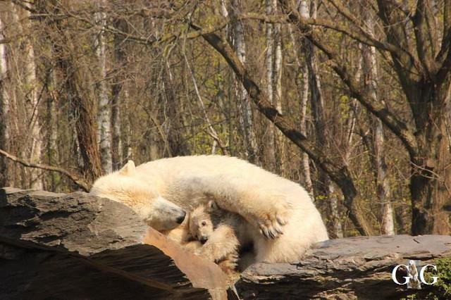 Besuch Tierpark Friedrichsfelde 06.04.201967