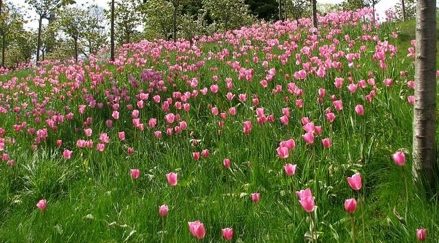 Northumberland, Alnwick - The Alnwick Garden (7)