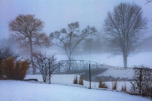 winter mist fog february trees landscape park fence somber sad cold