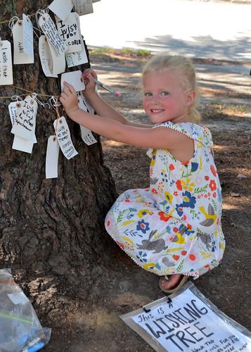 wishingtree tree deodar cedar art public interactive virginia norfolk ghent installationart neighborhood
