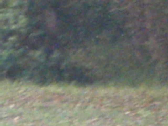 Petite fouine en fuite - Small weasel on the run