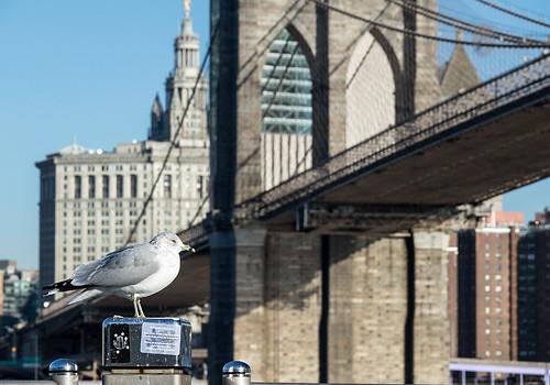 New York City / Brooklyn Bridge   by Aviller71