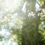 spring#001
