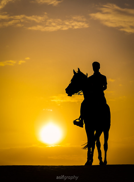 Two Beautiful Creature of Allah Sun and Horse