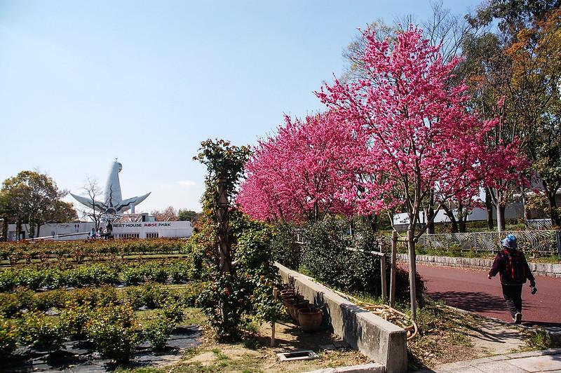 萬博公園櫻花 4