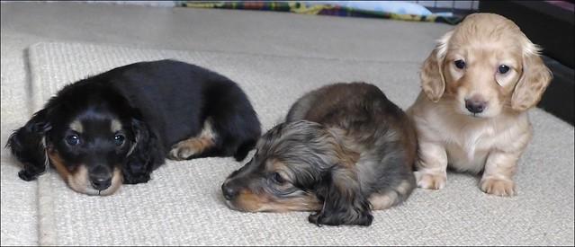 Baxter, Bailey, Buttercup