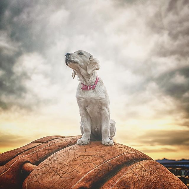 My cinnamon girl... sitting on top of a hill looking over Thousand Oaks on top of a gigantic baseball mitt... down the rabbit hole 🐾💕🐾