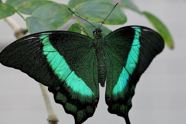 Jade and green