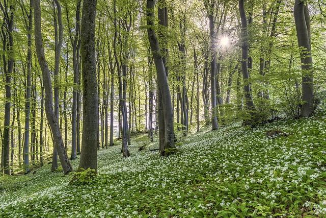 *Frühlingsduft* - *Smell of Spring*