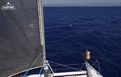 catamaran-sailing-holiday