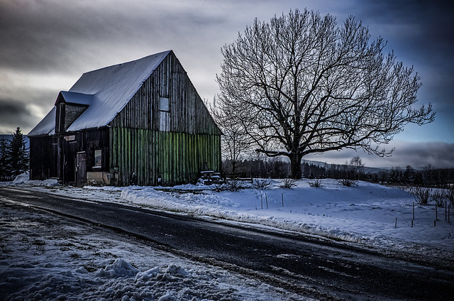 The tree and the old abandoned wooden shed in winter