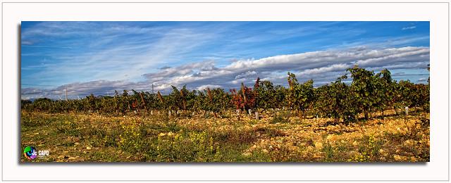 Le temps mûrit les vignes.