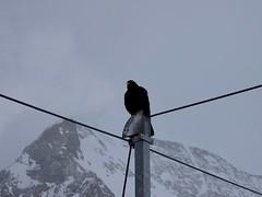 Visit to Jungfraujoch in Switzerland