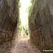 Vie Cave passageways