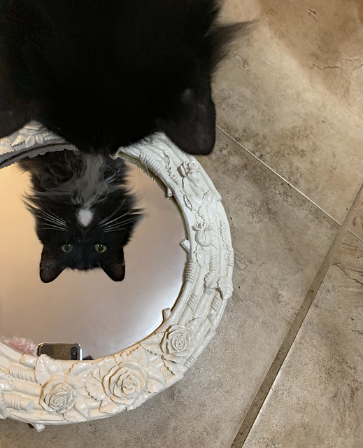 Ollie Finds the Mirror