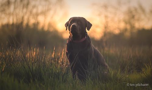 lizzy at dusk | by fen pilchaert