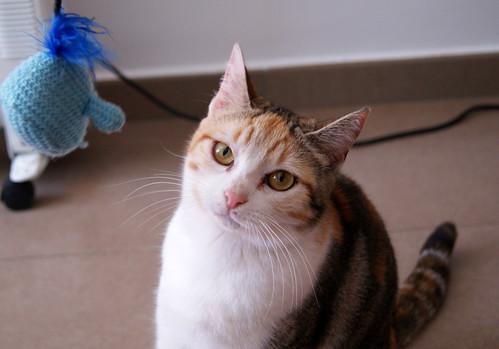 Zoe, gatita tricolor jaspeada divertida y guapa esterilizada, nacida en Septiembre´18, en adopción. Valencia. 46426546104_0b63375cd2