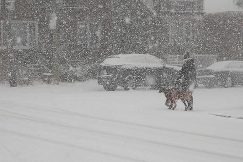 hiver avril neige dame chien promenade