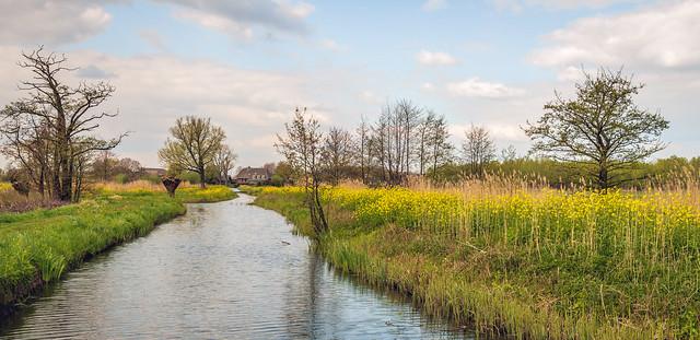 Colorful Dutch landscape in springtime