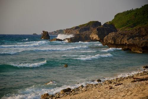 Coral Coastline