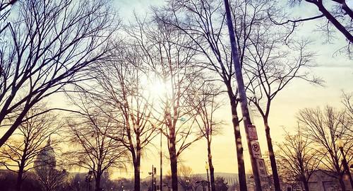 sunset trees outdoors policymakers washingtondc