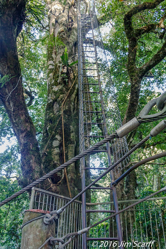 Ladder to observation platform on he Treetop Walkway   by Jim Scarff