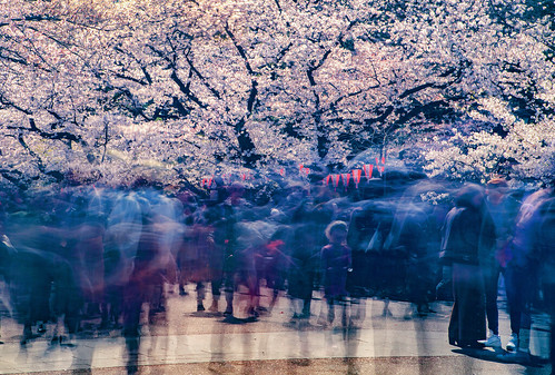 An Experiment With Long Exposure During Cherry Blossom Season, Tokyo | by El-Branden Brazil