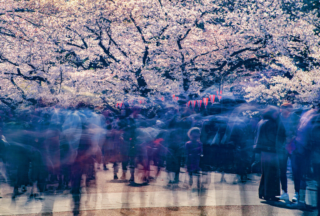 An Experiment With Long Exposure During Cherry Blossom Season, Tokyo