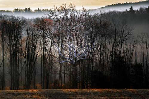 canon 5dmk4 tamron150600 catskillnewyork availablelight colors trees sunrise sun woods warm landscape light fog mountains