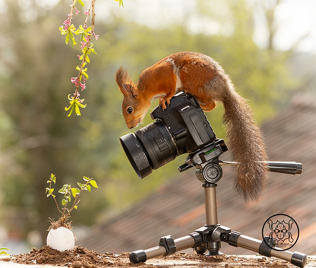 Red squirrel standing behind a camera and a egg with a plant