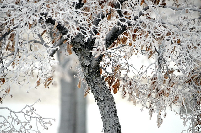 The Textures of Winter