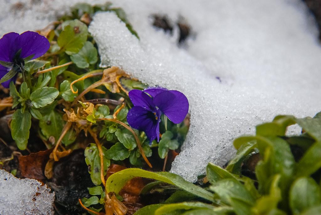 winter meets spring 15:37:05  DSC_2345