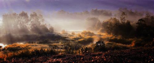 swamp moor sumpf fog nebel sun sunrise sonnenaufgang zürich zurich zürichairport zürichflughafen kantonzürich airportzürich aeroportzurich flughafenzürich kloten schweiz suisse switzerland