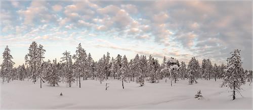 Ylläs-Finnland_92525P   by uwe_cani