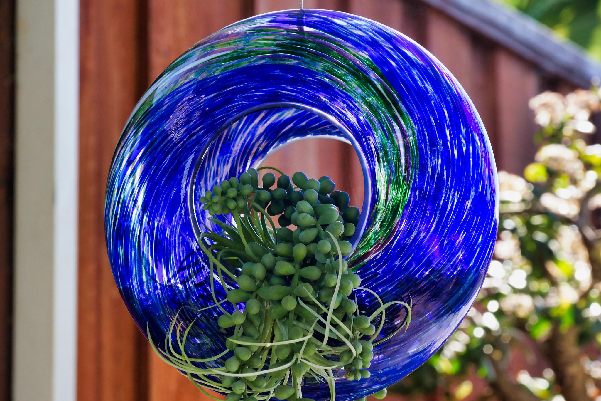 2019-02-06 - Nature Photography - Succulent - String-of-pearls