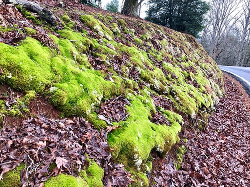 appalachia rural cowee northcarolina westernnorthcarolina south nationalregisterofhistoricplaces moss nature leaves