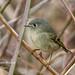 Steider Studios.Little Birds.1.5.19-4