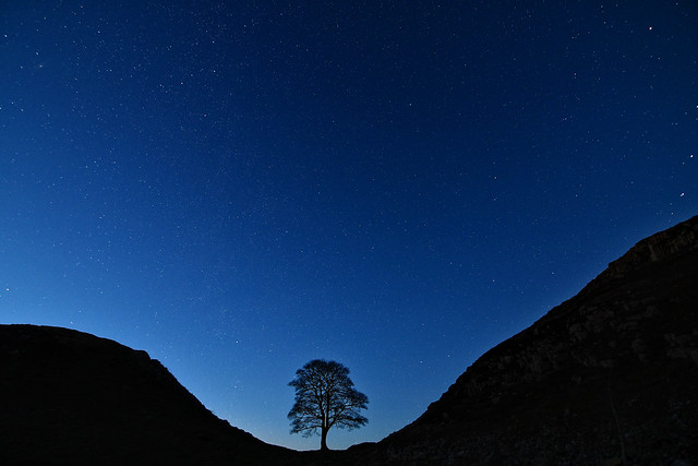 Sycamore Gap under the stars