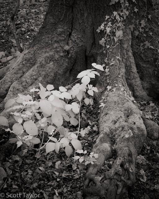 Tree Trunk II