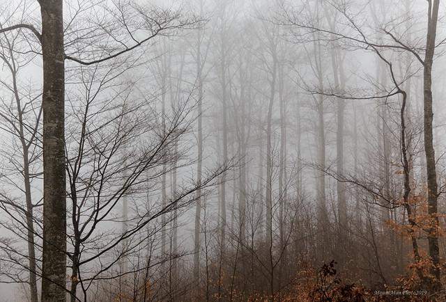 Magla na Učki (4)