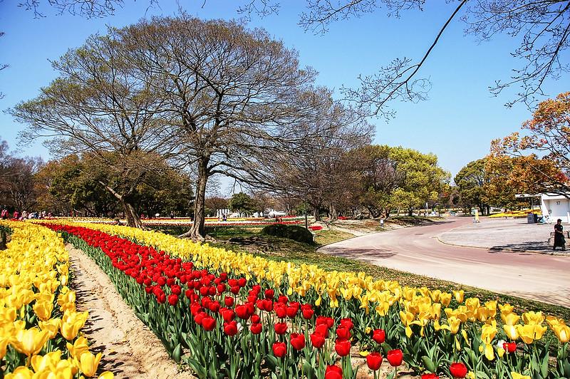 萬博公園鬱金香 (2)